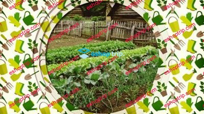 The Beginners Guide to Vegetable Gardening