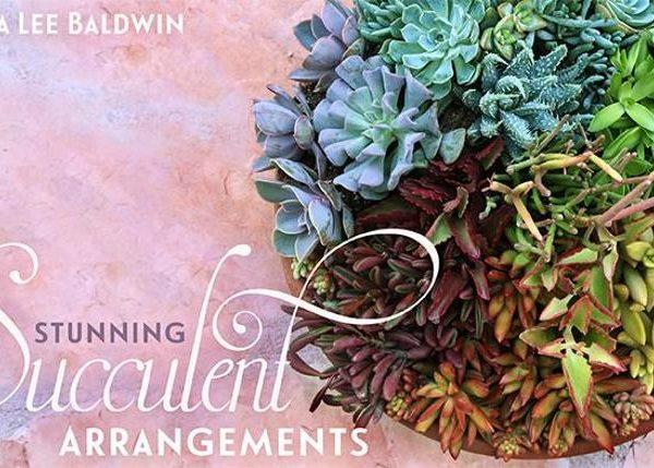 mybluprint Stunning Succulent Arrangements