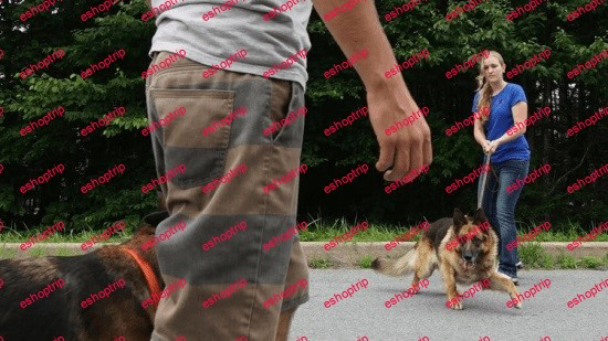 Dog Training How to Work With Aggressive Dogs